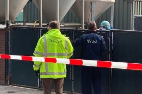 Ruiming nertsenfokkerijen waar coronavirus heerst is begonnen: 'Dit gaat de hele dag duren'