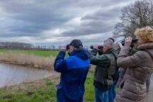 Vogelexcursie Kraayenbergse plassen met IVN Cuijk