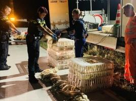 Kippen gedood, omdat ze niet goed vastzaten op vrachtwagen